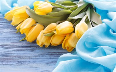 yellow tulips, blue silk fabric, bouquet of tulips, yellow flowers, spring flowers, tulips