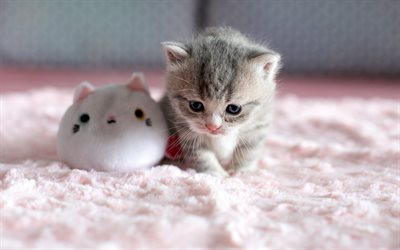 little cute kitty, cute animals, gray fluffy kitten, little cat, kitten with  toy