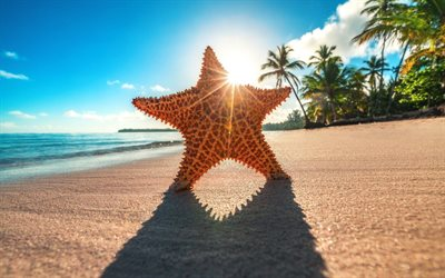 starfish, summer, sea, beach, paradise, bright sun, palms