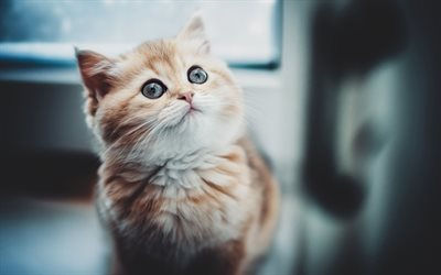 ginger cat, bokeh, pets, cats, cute animals, surprised cat