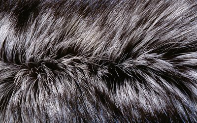 gray furry texture, 4k, macro, wool textures, furry backgrounds, gray fur backgrounds, fur textures, backgrounds with fur