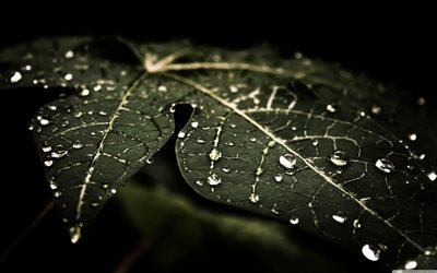 leaves with dew, macro, plants, dew drops, green leaves, bokeh, leaves