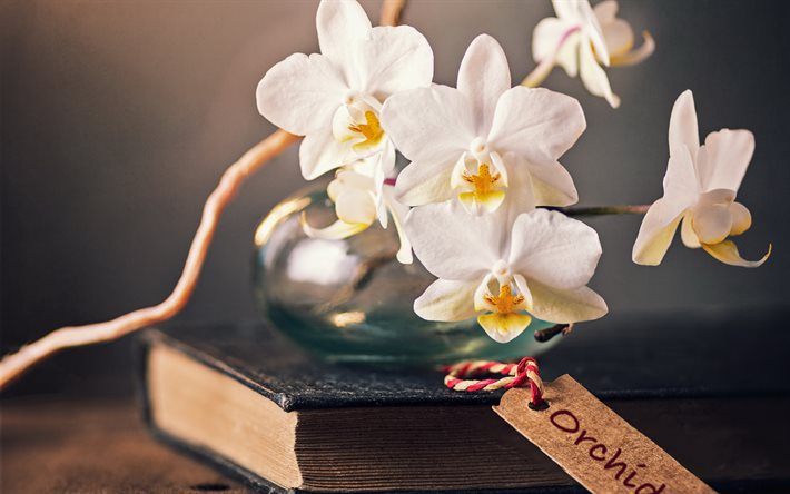 white orchids, flowers on a book, orchids, tropical flowers, orchid branch