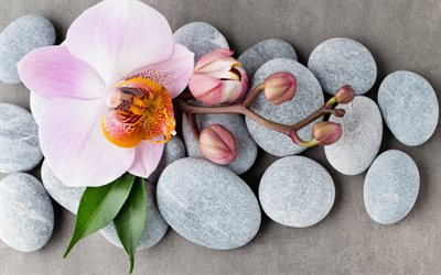 Pink orchids, spas, stones, orchids, tropical flowers, spa concepts