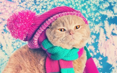 knitted hat, cat, scarf