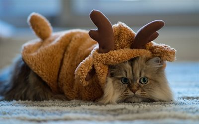 cat, pet, costume, deer