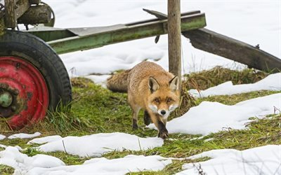 trailer, snow, winter, sly fox, sneaks
