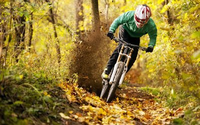 mountain bike, cross-country, race, forest