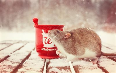 red cup, snow-covered table, rat
