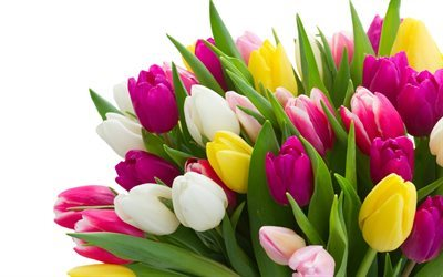 bouquets of flowers, tulips, a large bouquet