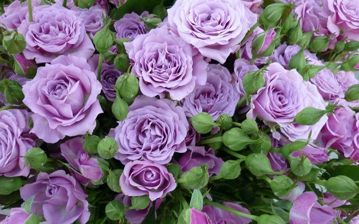 Telecharger Fonds D Ecran Roses Lilas Roses Couleur Rose Floral
