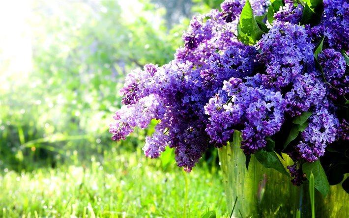 Scarica sfondi busok fiori di primavera lilla primavera for Sfondi pc primavera