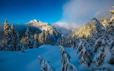 british columbia, vancouver, north shore, winter, snow, tree, mountains, canada