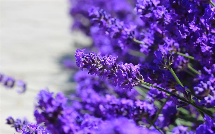 Scarica Sfondi Lavanda Floreale Sfondo Fiori Viola Fiori Di