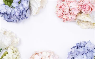 floral frame, white background, hydrangea, roses, beautiful flowers, frame of flowers, blue hydrangea, pink hydrangea