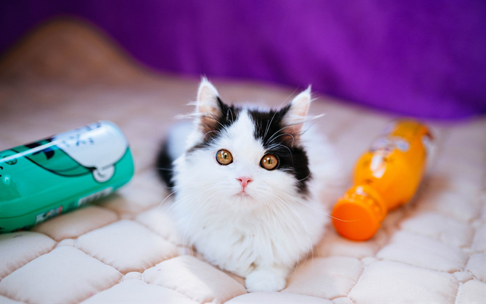 Download Wallpapers White Black Kitten Cute Little Animals Domestic Cat Kittens Cats For Desktop Free Pictures For Desktop Free