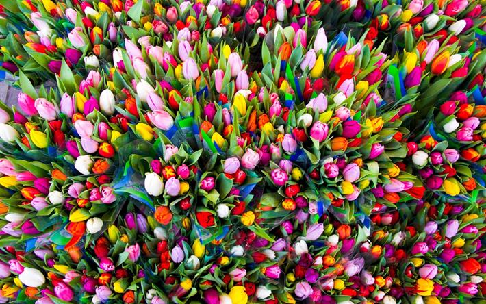 Scarica sfondi molti tulipani fiori di primavera i for Immagini primavera desktop