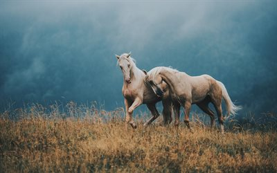 pair of horses, mountains, beautiful brown horses, wildlife, meadow, horses