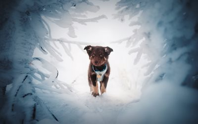 little brown puppy, winter, snow, German Shepherd, small dogs, pets