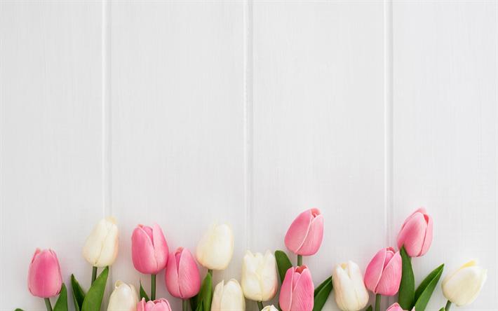 Fondos De Pantalla Rosa Rosa Flores Fondo De Madera: Descargar Fondos De Pantalla Los Tulipanes Sobre Fondo