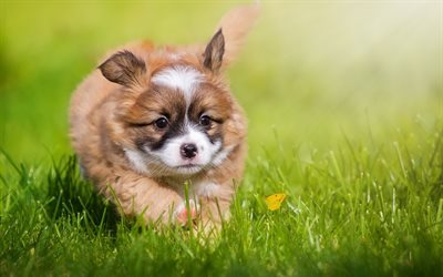 Small puppy, cute animals, dog, green grass, running puppy