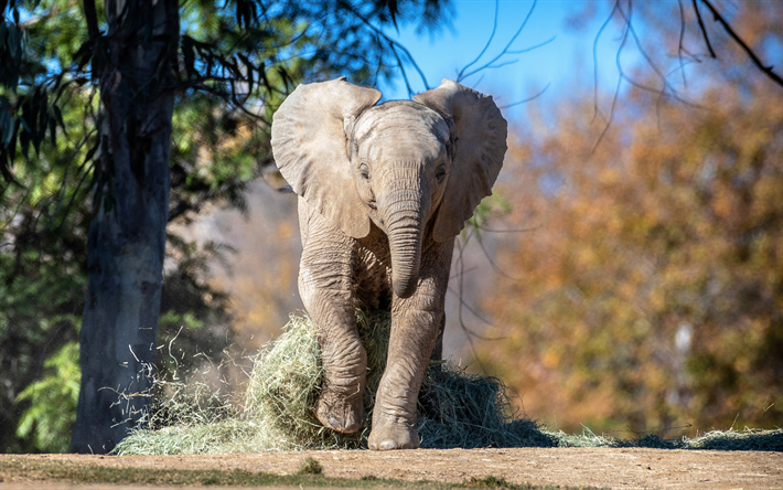 running elephant, 4k, zoopark, small elephant, cute animals, Elephantidae, elephants