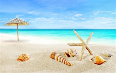 Tropical islands, beach, paradise, seashells, starfish, sea, ocean, travel concepts