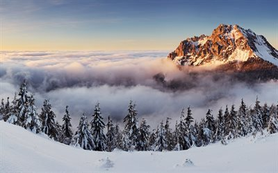 above clouds, morning, clouds, snow, slovakia, winter, mountains, panorama
