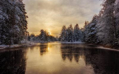 forest, winter, snow, morning, frozen river, ice, wounds