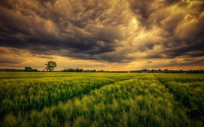 evening, summer, field, sunset, clouds, tree