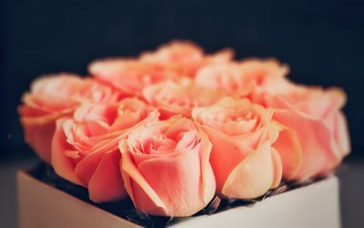 orange roses, roses, rose, a bouquet of roses, beautiful bouquet, bouquet free