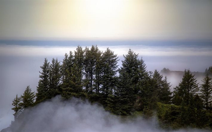 forest, tree, tops of mountains, khmara, mountains, alinci, fog, clouds, gori