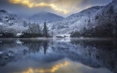 forest, snow, lake, winter landscape, winter