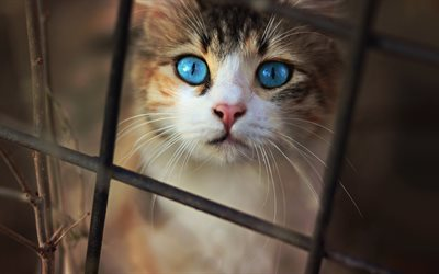cat with blue eyes, pets, little cats, long mustache, kittens, frightened look, cats