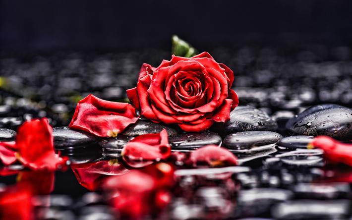 Resultado de imagen para fotos de rosas 4k