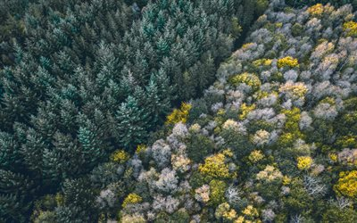 forest aerial view, trees, view from above, forest, winter, Coniferous forest