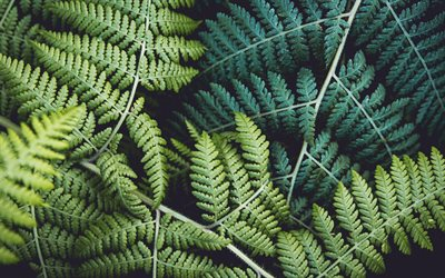 fern, green leaves texture, background with green leaves, background with fern