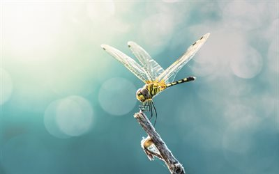 dragonfly, tree branch, macro, insects, beautiful yellow dragonfly