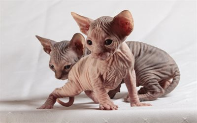 Sphynx Cat Plush Toy