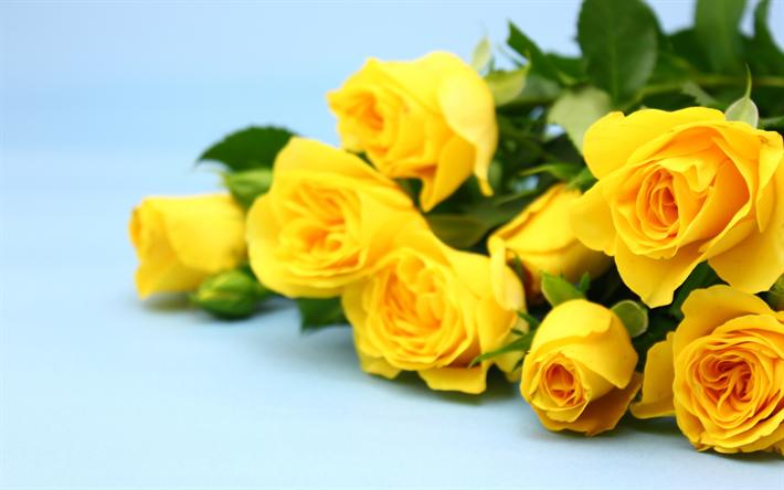 Descargar Fondos De Pantalla Rosas Amarillas Fondo Azul Ramo De
