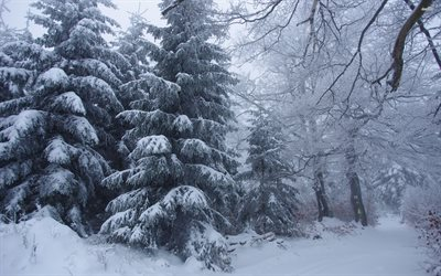 winter, snowy forest, snow, trees, beautiful winter landscape