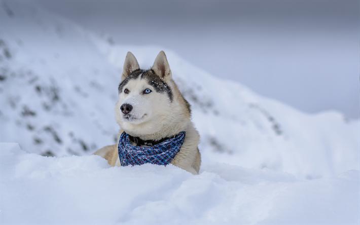 T l charger fonds d 39 cran husky de sib rie 4k l 39 hiver for Fond ecran hiver animaux
