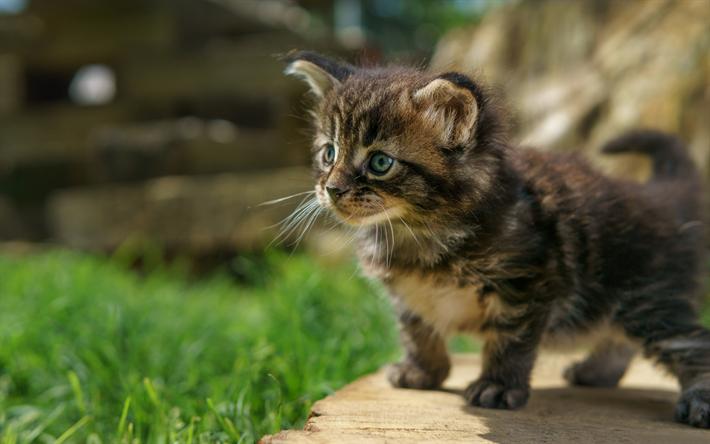 Cok Yaramaz Kedi