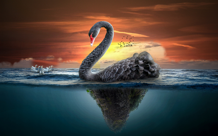 4k, black swan, sea, underwater world, ducks, swans