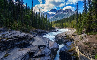 mountain river, forest, spring, morning, water, stones, beautiful river, Banff National Park, Canada
