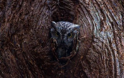 owl, tree, forest birds, brown owl, forest