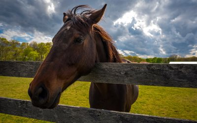 Brown horse, fence, pasture, horses