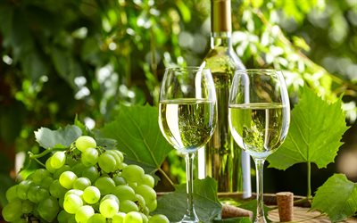 White wine, grapes, glasses of wine, summer, village wine barrel, wine
