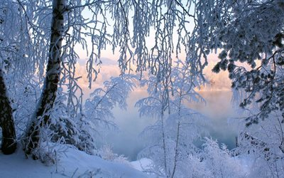 landscape, winter, nature, trees, snow, frost