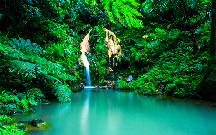 Descargar Fondos De Pantalla Azores 4k La Selva La Cascada Oasis
